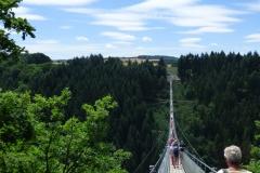 Majestätisch und erhaben ruht die Hängeseilbrücke über den Wipfeln.